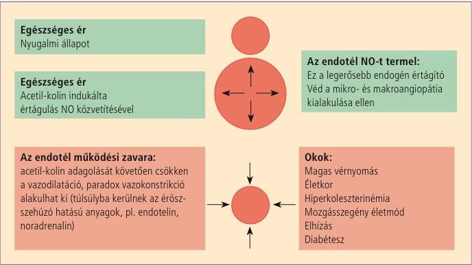 szisztematikus magas vérnyomás)