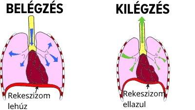 rekeszizom-légzés hipertóniával)
