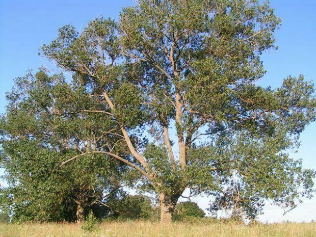 Gyógyulj a fák energiájával | TermészetGyógyász Magazin
