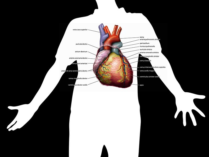hogyan lehet hatékonyan kezelni a magas vérnyomást népi gyógymódokkal