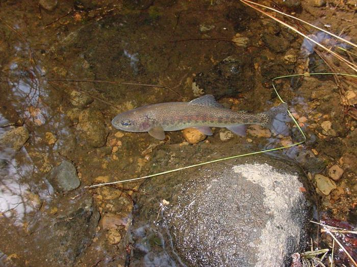 gyakorolható-e víz alatti vadászat hipertóniával