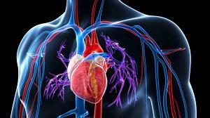 Természetes módszerekkel a magas vérnyomás ellen