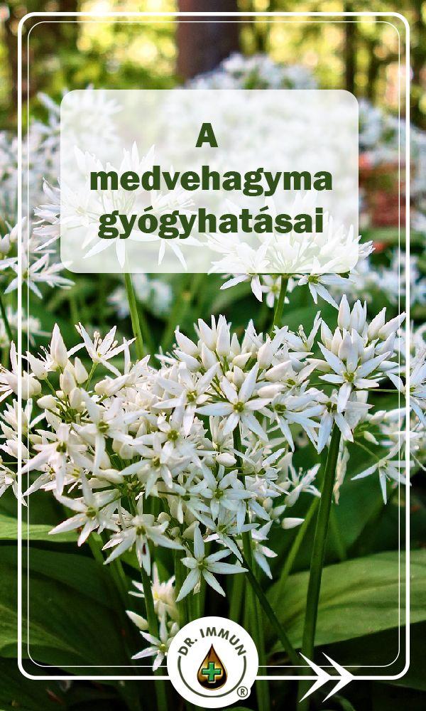 virág magas vérnyomás esetén)