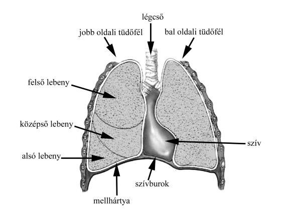 a pulmonalis keringés magas vérnyomása