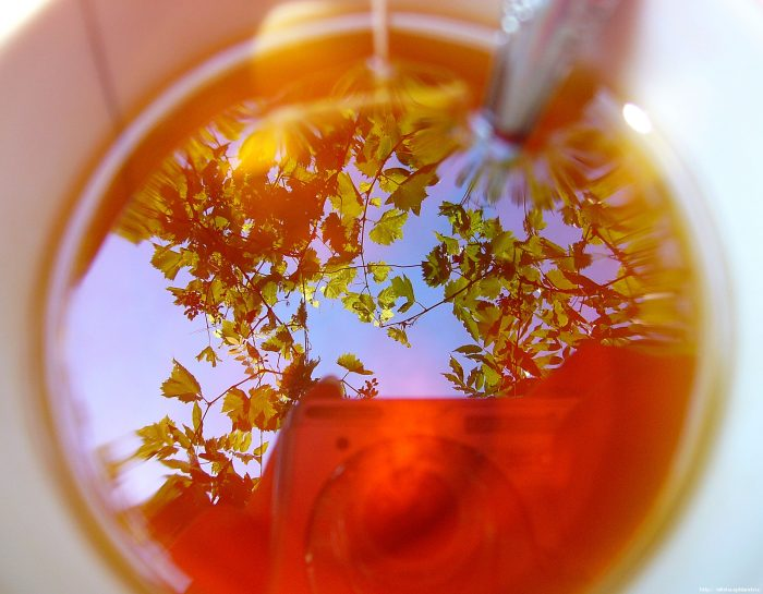A tea növeli vagy csökkenti a nyomást? - Aranyér