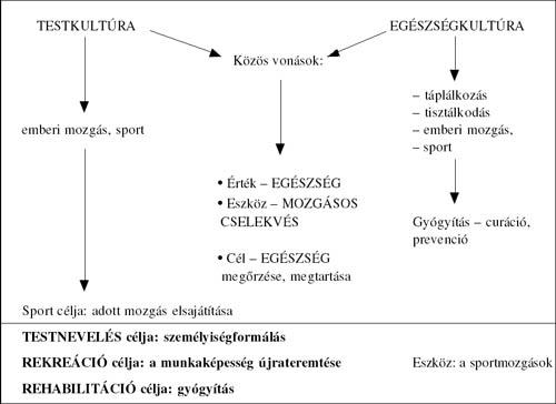 Reumás láz tünetei és kezelése