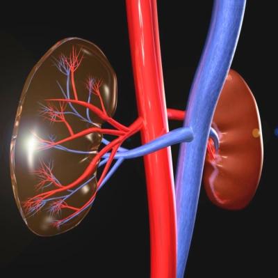 a veseartériák denervációja a magas vérnyomás kezelésében