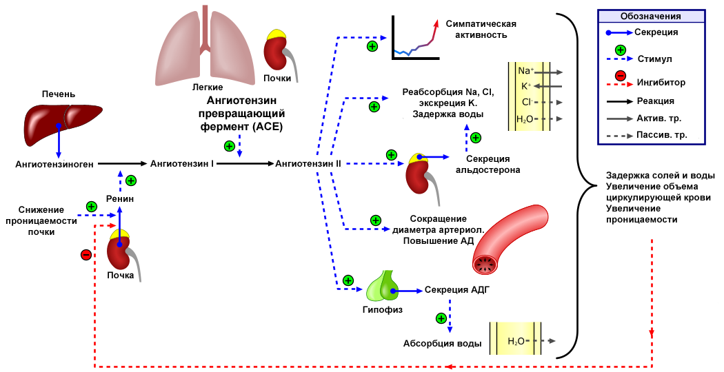 Hipertenzív válság: tünetek és tünetek, válságfajták és kezelési módszerek - Dystonia November