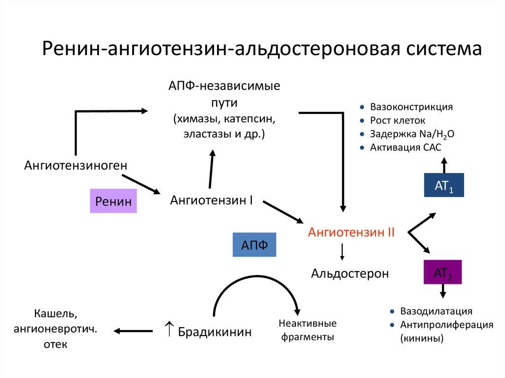 milyen fizikai tevékenységek megengedettek magas vérnyomás esetén)