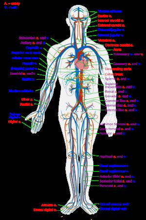 2 típusú magas vérnyomás kezelésére szolgáló gyógyszer