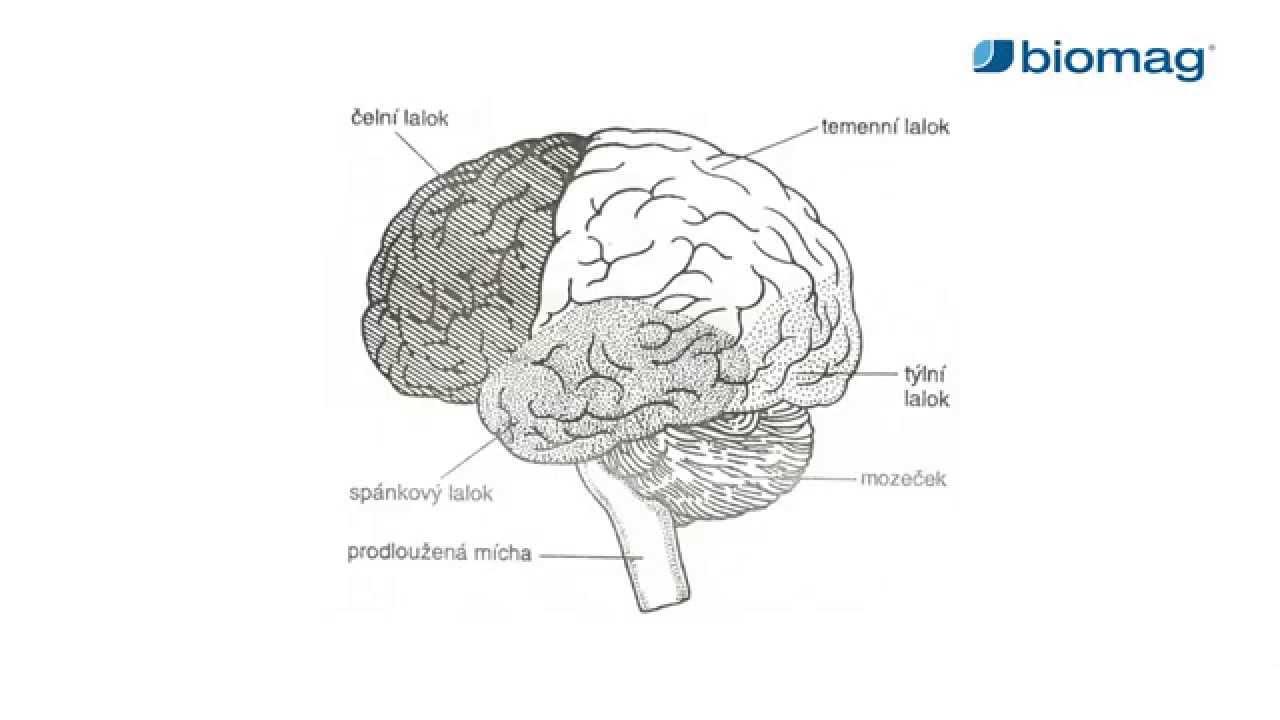 magas vérnyomás és agyi ödéma)
