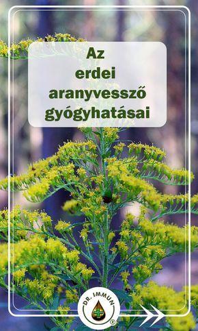 Gyógynövények - magas vérnyomásra