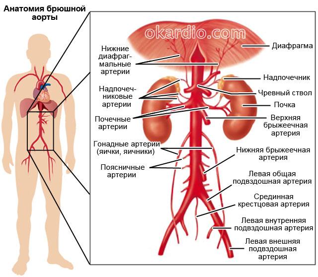 magas vérnyomás mértéke 1 kockázat 1 szakasz gyümölcslé magas vérnyomás esetén
