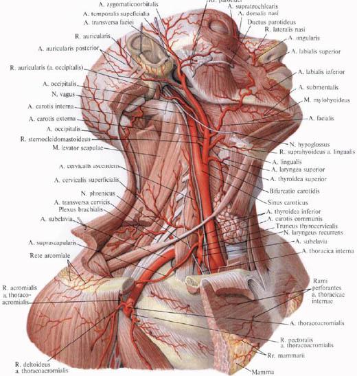 EKG a magas vérnyomás dekódolásához