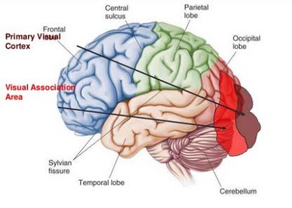 """Neurocirculatory adynamy - """"nem létező betegség"""" tünetei és kezelése - Szívroham November"""