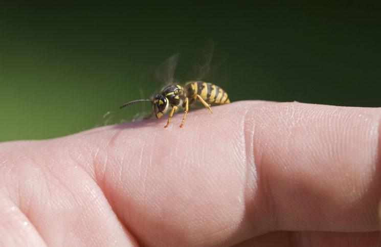 mezei méh és magas vérnyomás)