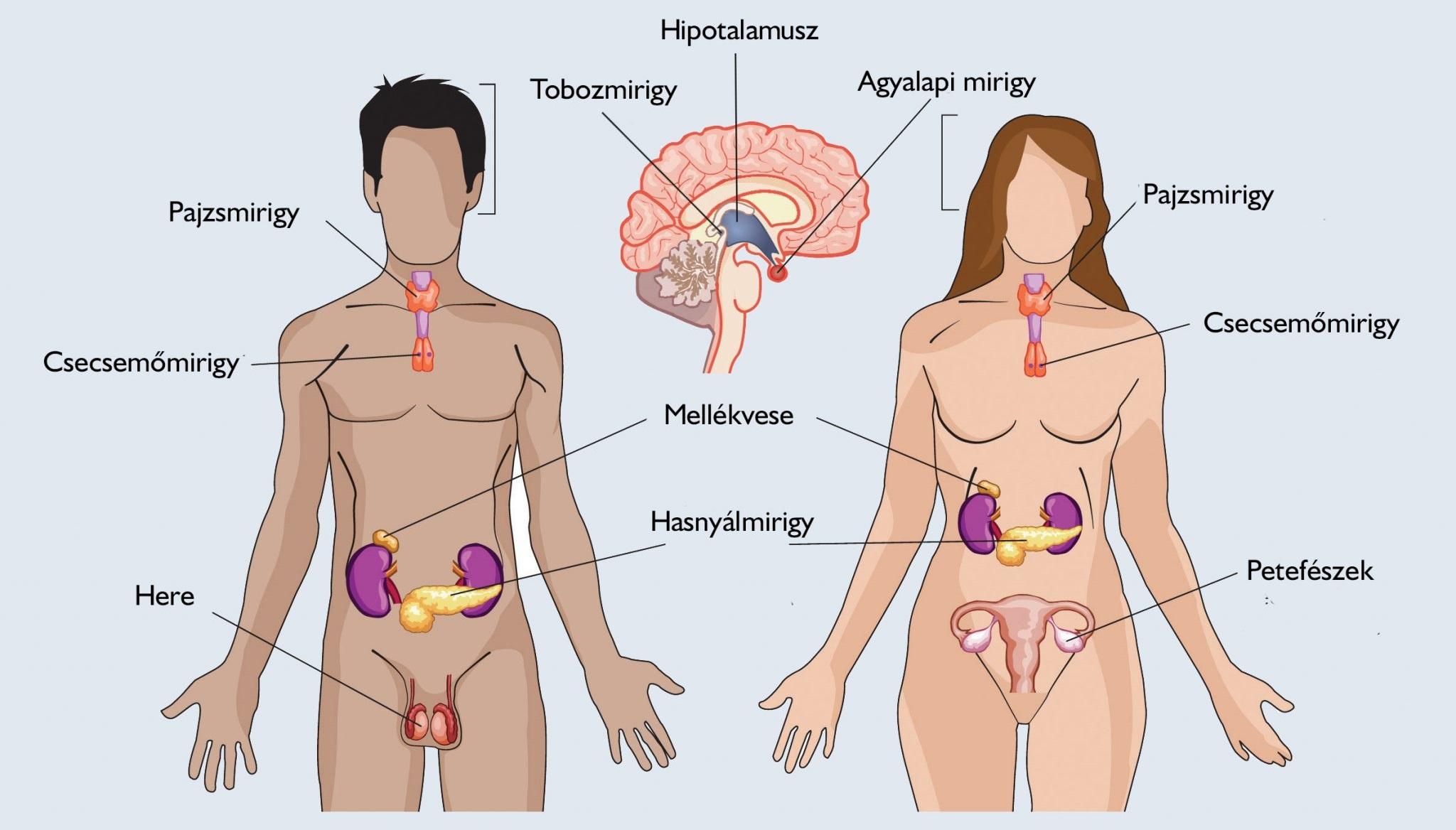 magas vérnyomás endokrin rendszer