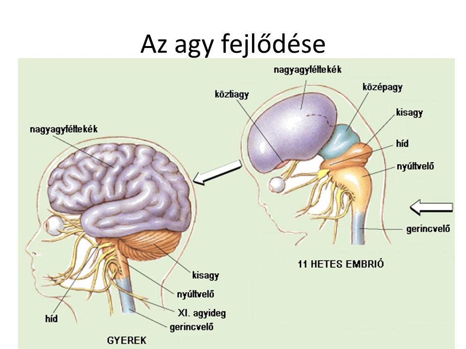 magas vérnyomás az agy fehérállománya