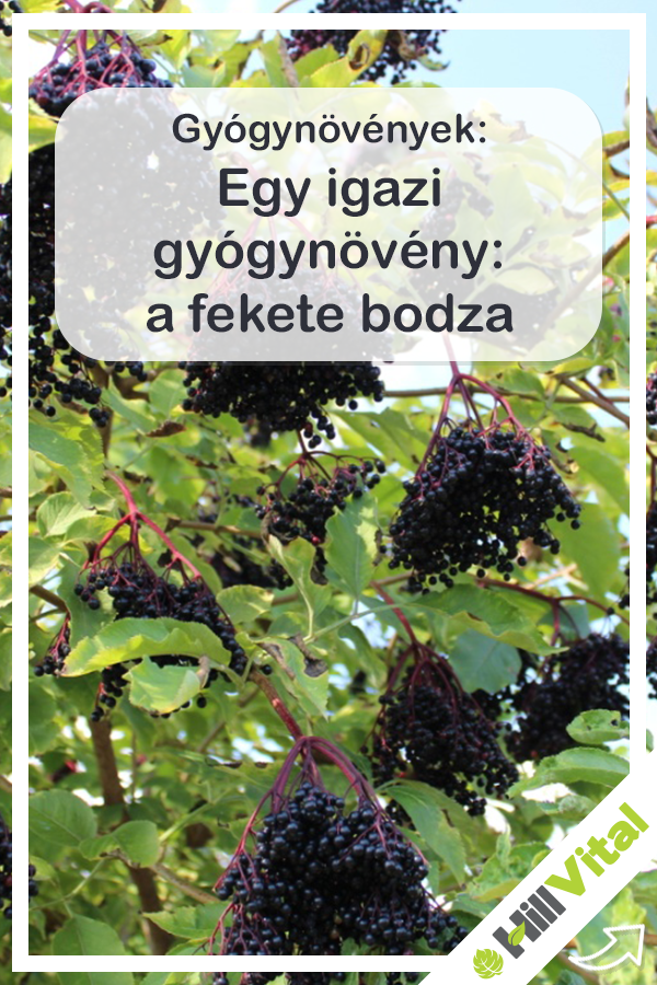 bodza magas vérnyomás ellen)