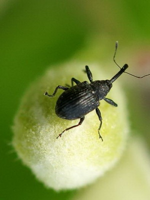 bogarak gyógyítója magas vérnyomás ellen
