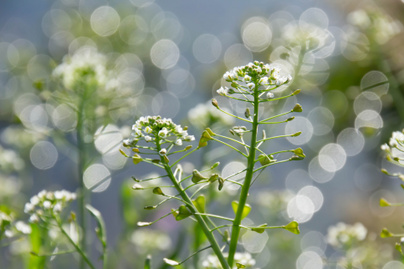 növényi magas vérnyomás esetén)
